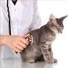 Ветеринарные клиники в Верхней Синячихе